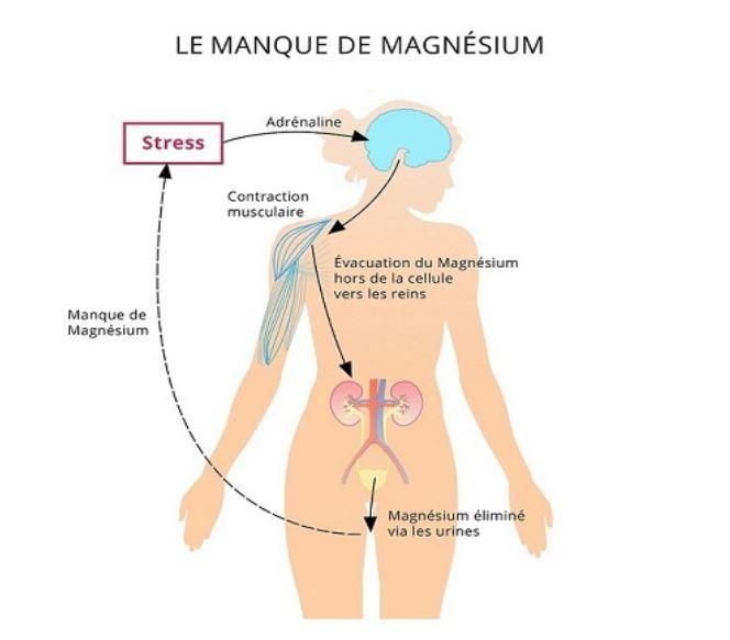 Manque magnésium